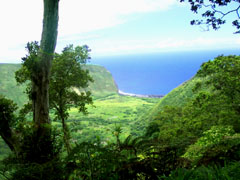 Waipio Valley from High Up on the Ridge